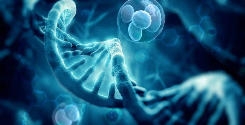 Wharton's Jelly Mesenchymal Stem Cells